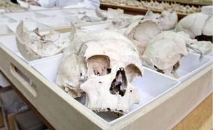 Francis Duranthon a retrouvé 53 mandibules dans une cave du Muséum.