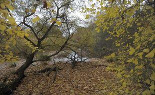 Un couple dont un quinquagénaire nu tenu en laisse par une jeune femme a été interpellé en forêt de Meudon (Illustration).