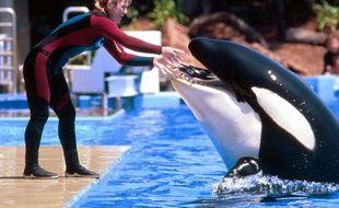 La dresseuse Dawn Brancheau et l'orque Tillikum, dans le parc SeaWorld à San Diego, en 1998.