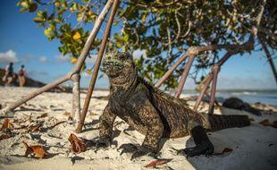 Un iguane se prélasse non loin de touristes sur une place de l'île de Santa Cruz au Galapagos.