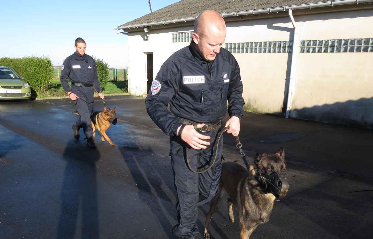 Nord les coll gues du chien diesel sont pr ts partir en for Police nationale lille
