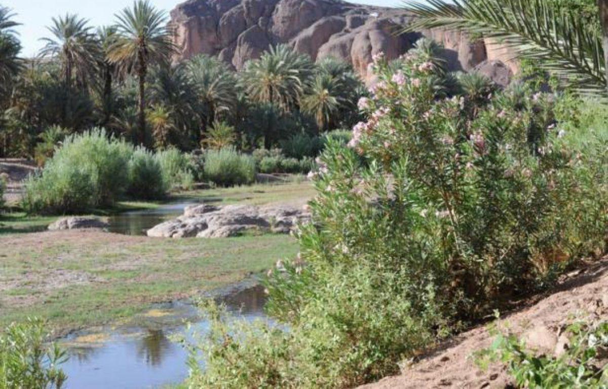 Nichée dans les montagnes du Haut-Atlas, la vaste oasis d'Errachidia, parmi les plus belles du sud marocain, est aujourd'hui menacée par l'exploitation irraisonnée des points d'eau qui lui donnent vie depuis des millénaires. – Abdelhak Senna afp.com