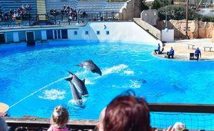Les dauphins du parc Astérix en 2016.