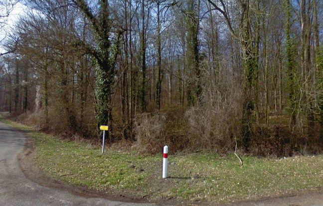Aisne: La femme enceinte, retrouvée morte, a bien été tuée par des chiens