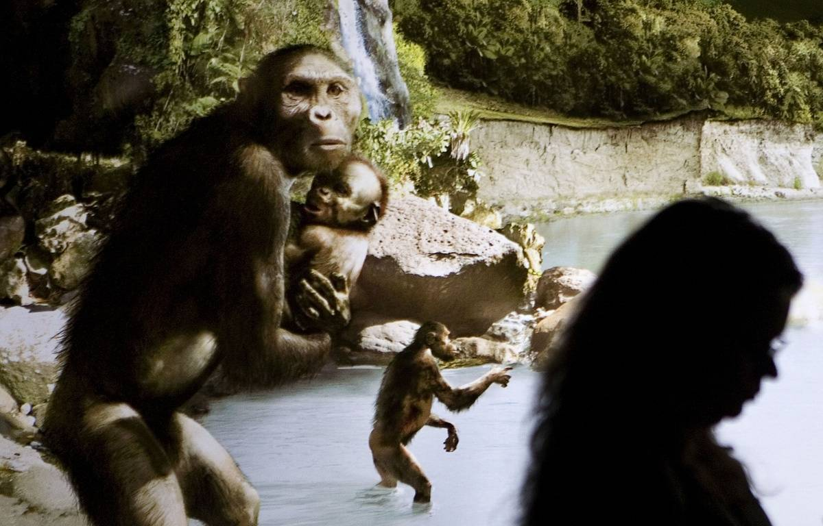 Sculptures représentant des hominidés bipèdes «australopithecus afarensis» au Musée des sciences naturelles de Houston, au Texas, en 2007. – Dave Einsel / Getty Images North America / AFP