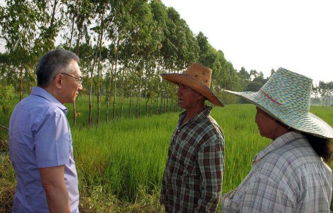 Thirawit Leetavorn, vice-président de Double A, et les riziculteurs dans la rizière où poussent des eucalyptus pour la pâte à papier en Thaïlande, le 14 octobre 2014.