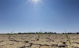 La sécheresse a été particulièrement sévère dans plusieurs régions de France cet été. Ici, à Saint-André de Corcy, dans l'Ain.