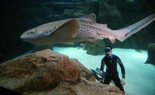"""Plonger près d'une heure au milieu de 25 grands requins de l'Aquarium de Paris: tel a été dimanche le défi insolite du spécialiste de l'apnée Pierre Frolla pour rappeler que les squales, loin d'être les terrifiants mangeurs d'hommes des """"Dents de la mer"""", sont des """"espèces menacées""""."""