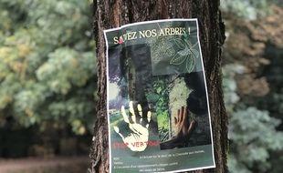 Seize arbres de la Chaussée des moines de Vertou menacés