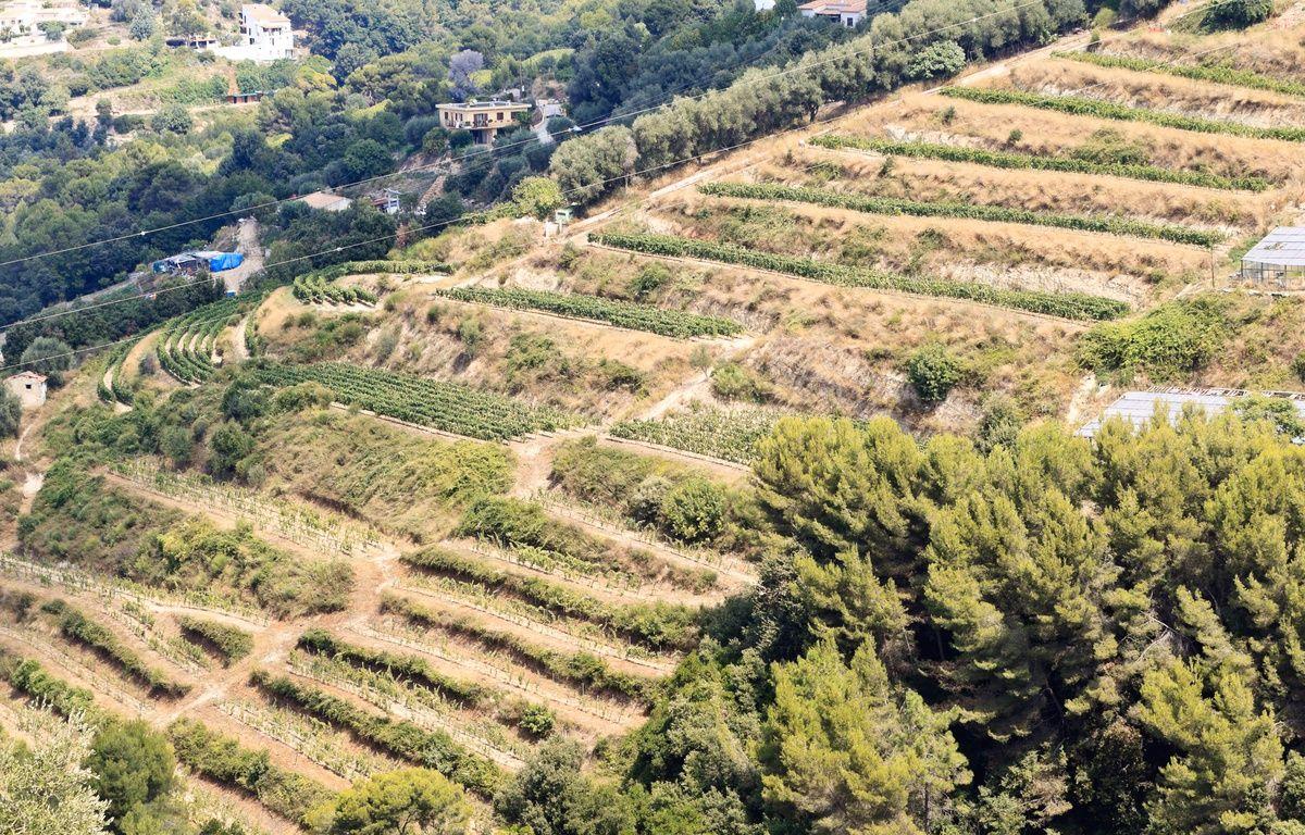 Le produit de ces vignes nçoises a récolté une médaille d'argent au concours général agricole.  – Domaine Saint Jean