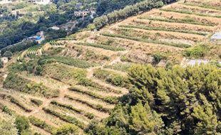 Le produit de ces vignes nçoises a récolté une médaille d'argent au concours général agricole.