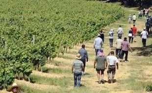 Les agriculteurs recrutent régulièrement des employés l'été pour les aider