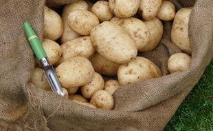 Des chercheurs ont trouvé des patates vieilles de 10.900 ans dans l'Utah