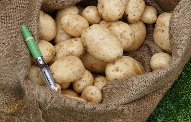 Hong Kong: Une grenade de la Première guerre mondiale découverte dans une cargaison de patates françaises