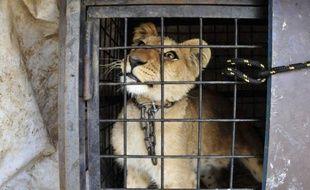Le Liban est devenu une plaque tournante du trafic d'animaux, selon des associations de protection de la nature qui essaient non sans mal d'attirer l'attention de la population sur les mauvais traitements dont ils sont victimes.