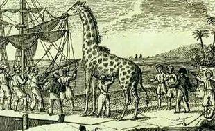 Zarafa, la première girafe de France, lors de l'embarquement à Alexandrie en 1826.