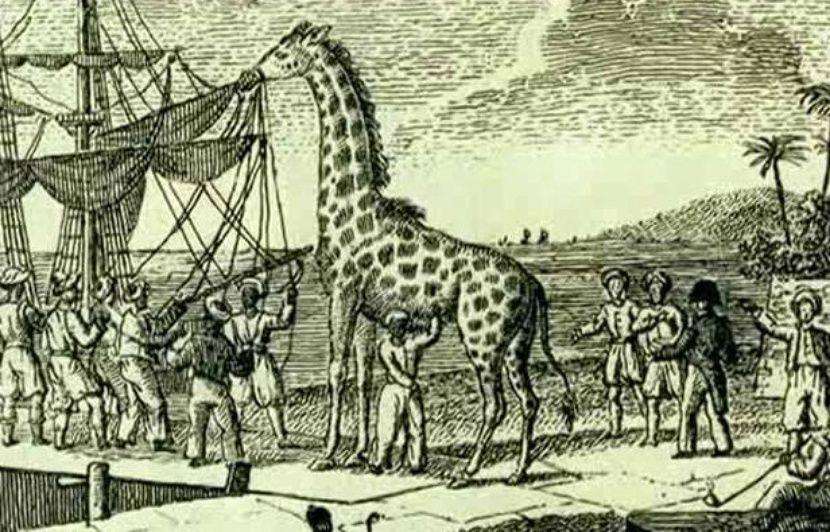 """Résultat de recherche d'images pour """"photos de la girafe de charles X"""""""
