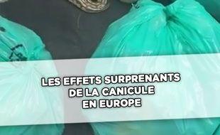 Les effets inattendus de la canicule en Europe (capture d'écran vidéo)