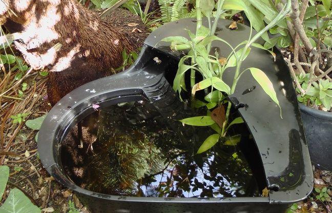 Les habitants du Cannet sont invités à recréer des mares pour piéger les moustiques grâce... à des poissons.