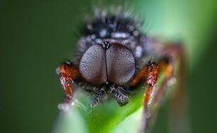 Illustration d'une mouche