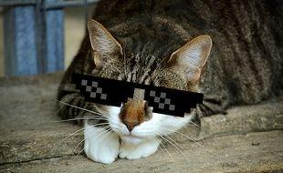 Le chat reste le roi sur Internet mais sa place semble contestée.
