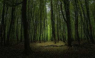 Le site se trouve dans une forêt Vélizy-Villacoublay et Meudon (illustration).