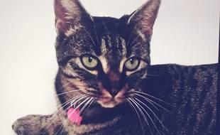 La chatte Nala a été mutilée à Pamiers fin juin. Sa propriétaire a déposé plainte et réclame justice.