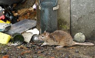 Lille, le 20 mai 2013. Les rats ont envahi un pate de maisons du quartier de Fives.