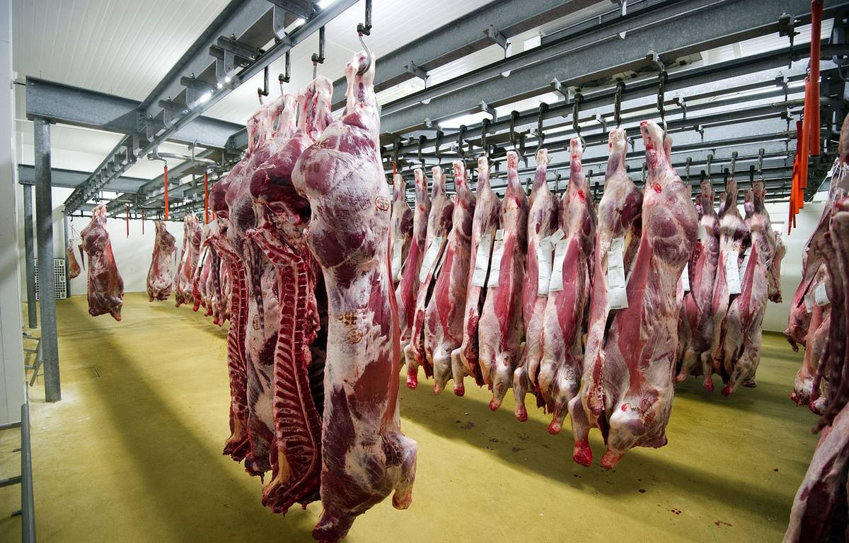 Illustration d'un abattoir en France.  – JEAN-SEBASTIEN EVRARD / AFP