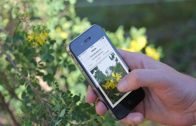 L'appli Plantnet a été créée par un consortium de chercheurs à Montpellier