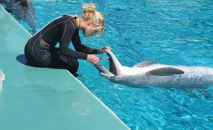 Les dauphins de Planète sauvage sont très prisés des visiteurs