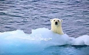 Un ours polaire en Norvège.