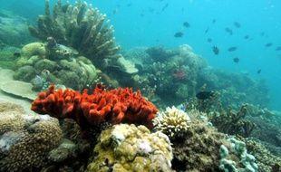La zone marine protégée de la baie de Honda près de l'île de Palawan aux Philippines