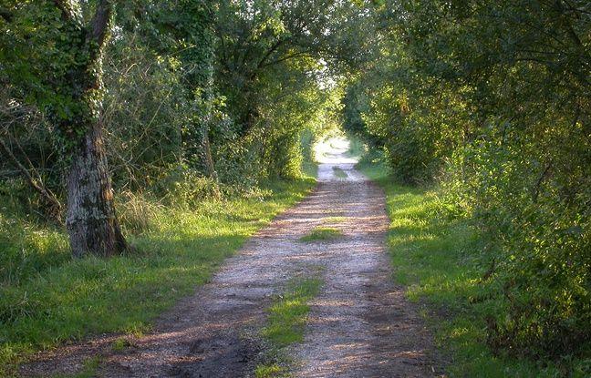 Le chemin de visite de la réserve est limité à dessein.
