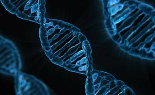 Des échantillons d'ADN, illustrations
