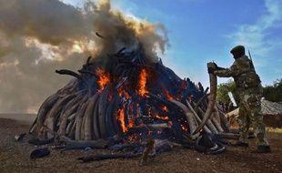 Un officier kenyan se tient près d'une pile de 15 tonnes d'ivoire brûlée dans un parc de Nairobi le 3 mars 2015