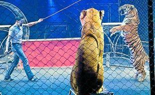 Répétition des fauves pour le spectacle Symphonik du cirque Gruss
