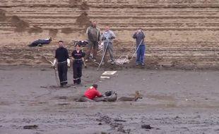 Sauvetage d'un chevreuil au lac du Laouzas.