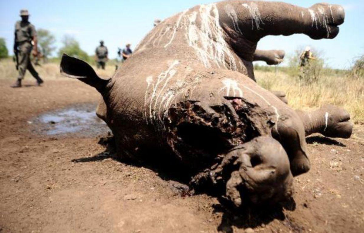 Un rhinocéros de trois jours tué à Houtboschrand en Afrique du Sud le 27 novembre 2013 – STRINGER AFP