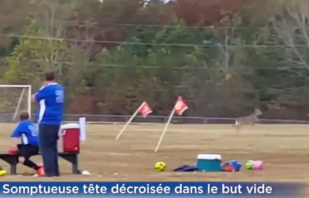 Un chevreuil est entré sur le terrain et a marqué un but lors d'un tournoi pour enfants disputé dans le Tennesse, le 25 octobre 2015.  – Capture d'écran