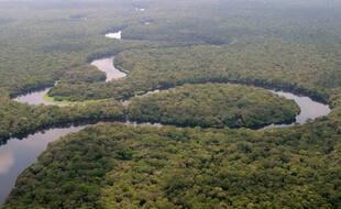 Le parc national de la Salonga, en République démocratique du Congo.