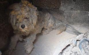 Ce chien a survécu à l'incendie d'Athènes - Le Rewind
