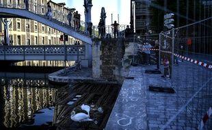Les cygnes du canal de l'Ourcq (19e arrondissement)