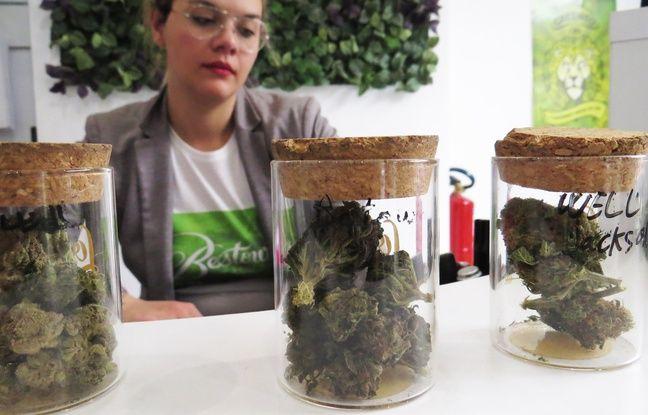 Même odeur, même couleur, mais pas le même usage pour ce cannabis.