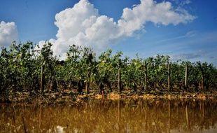 Des vignobles dévastés après un orage le 24 juillet 2013 près de Pommard