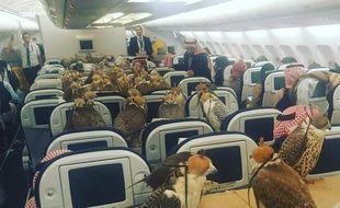 lensoo, un utilisateur de Reddit a publié cette photo de faucons à bord d'un avion