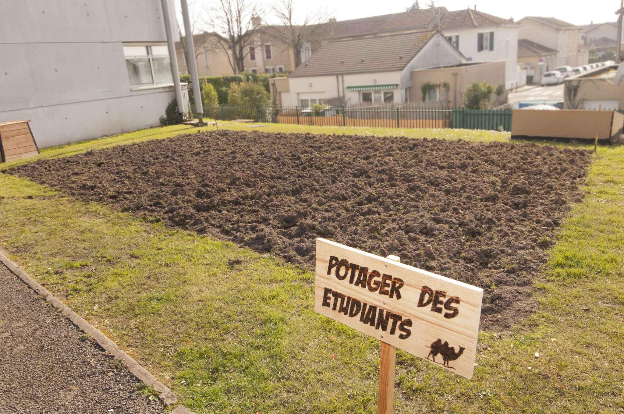 Bordeaux une association tudiante lance un jardin - Association des legumes au potager ...
