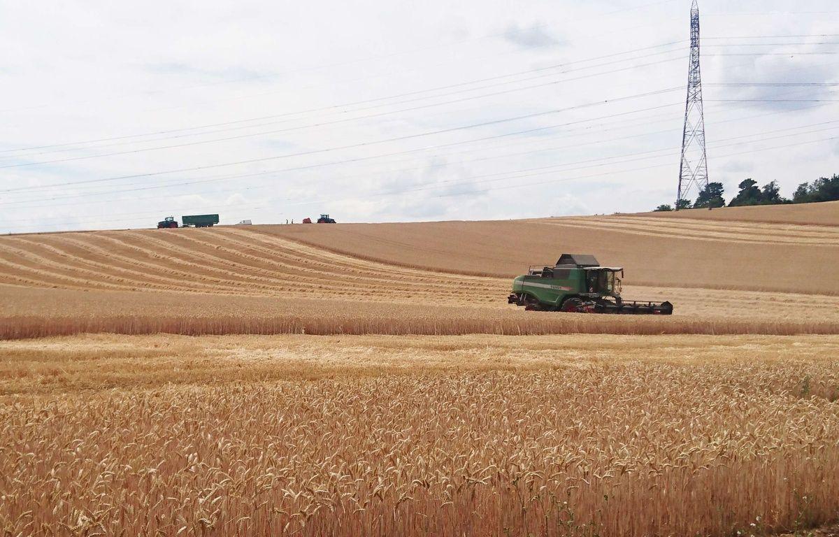 Début de la moisson de blé dans un champ de Saint-Quentin-Fallavier, en Isère.(Illustration) – SIPA