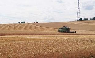 Début de la moisson de blé dans un champ de Saint-Quentin-Fallavier, en Isère.(Illustration)