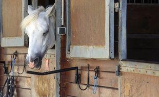Un cheval dans un centre équestre (Illustration)